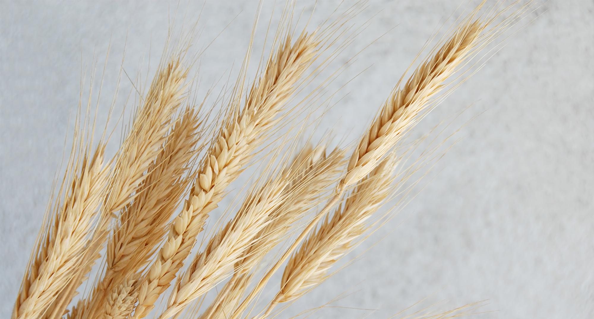 NUTRITION: Do I Need To Eat Gluten Free?